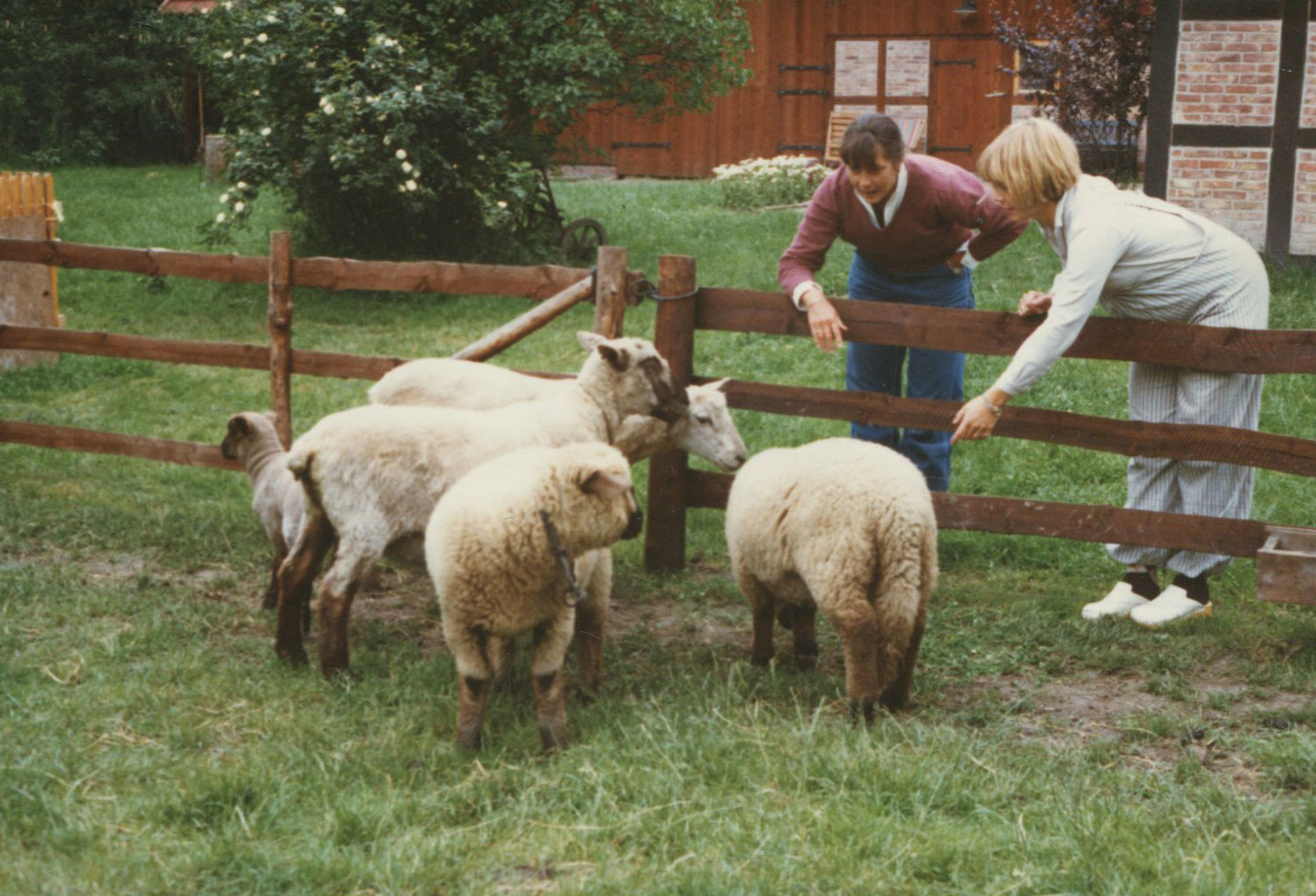 207-mom and Tina and the sheep